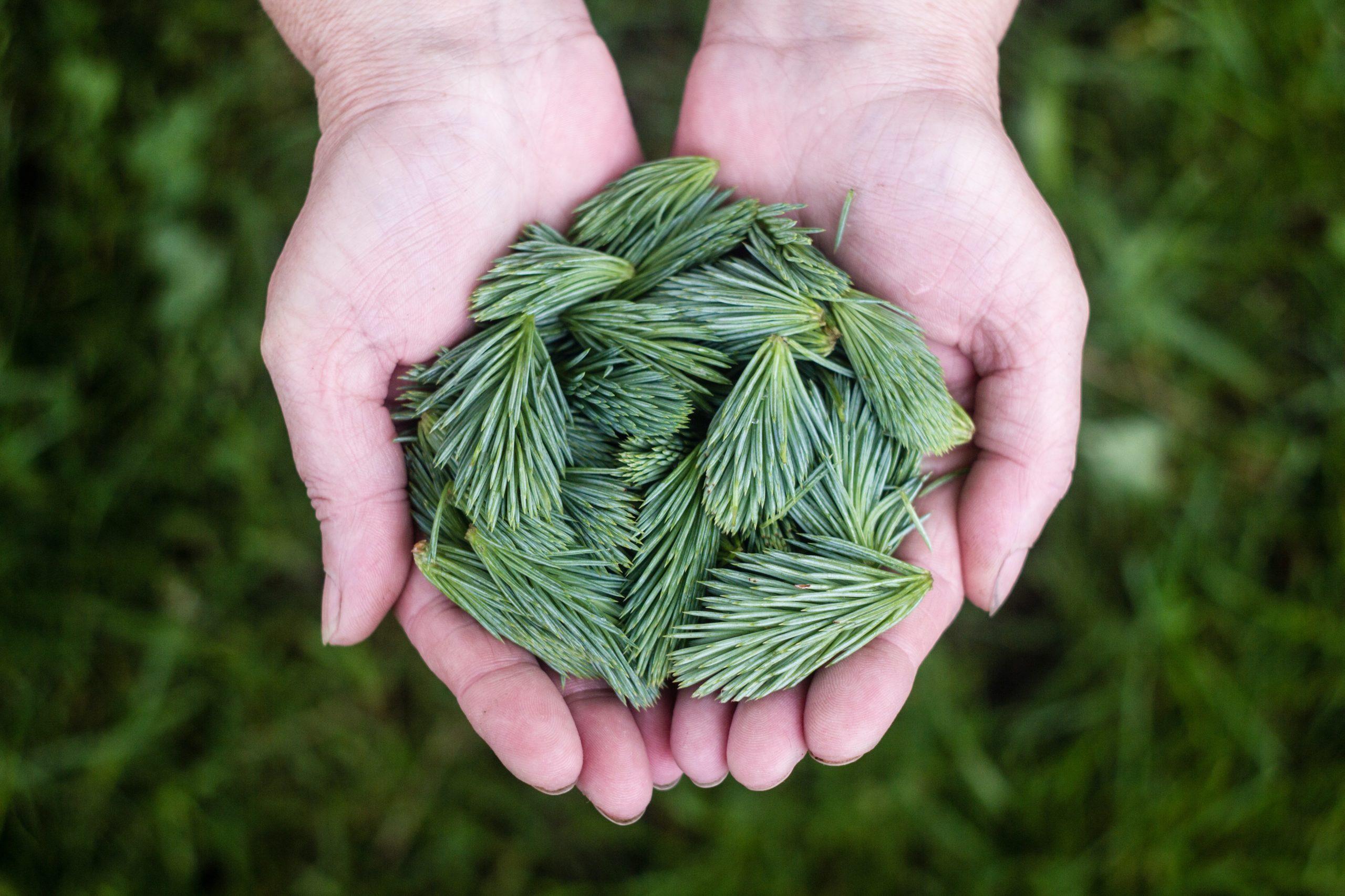 herboriste--herbe-plante-sauvages-medicinale-blog