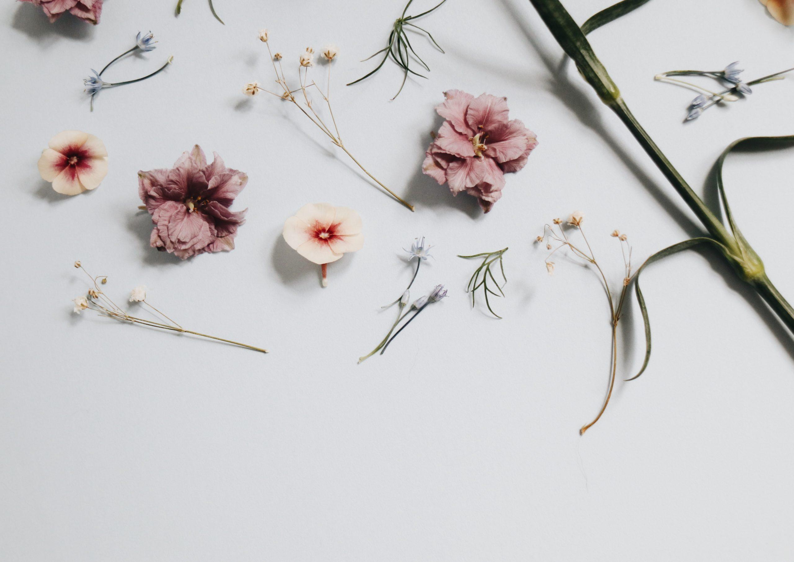 herboristeenherbes-plante-medicinale