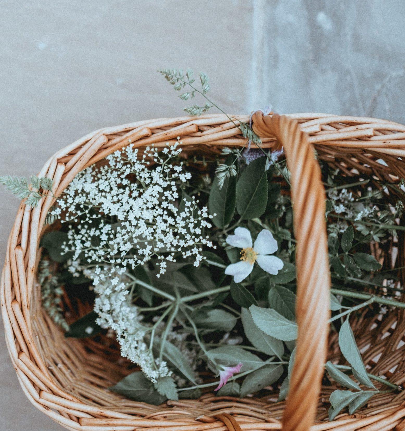 herboristeenherbes-tisanes-biologiques