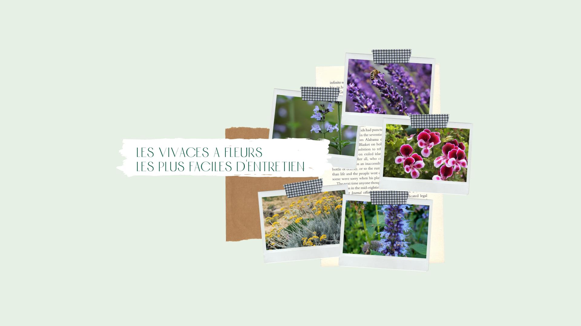 5-des-vivaces-a-fleurs-les-plus-faciles-dentretien