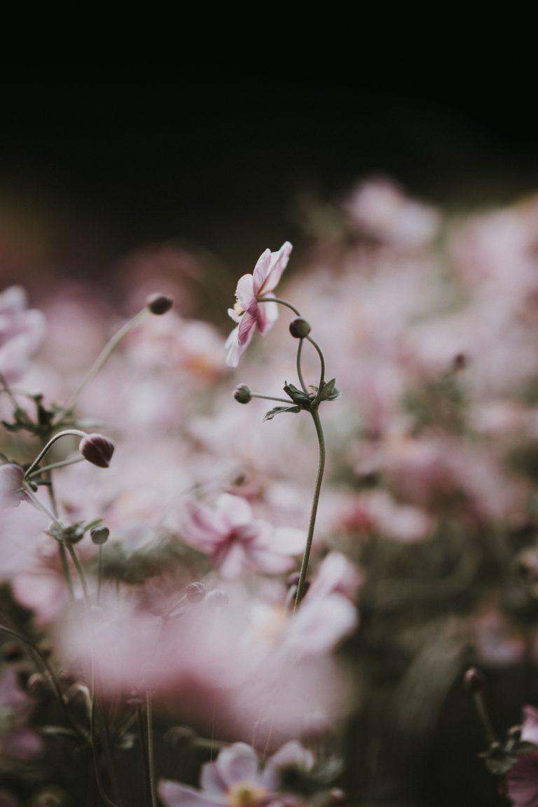 herboristeenherbes-le-meilleur-de-la-nature